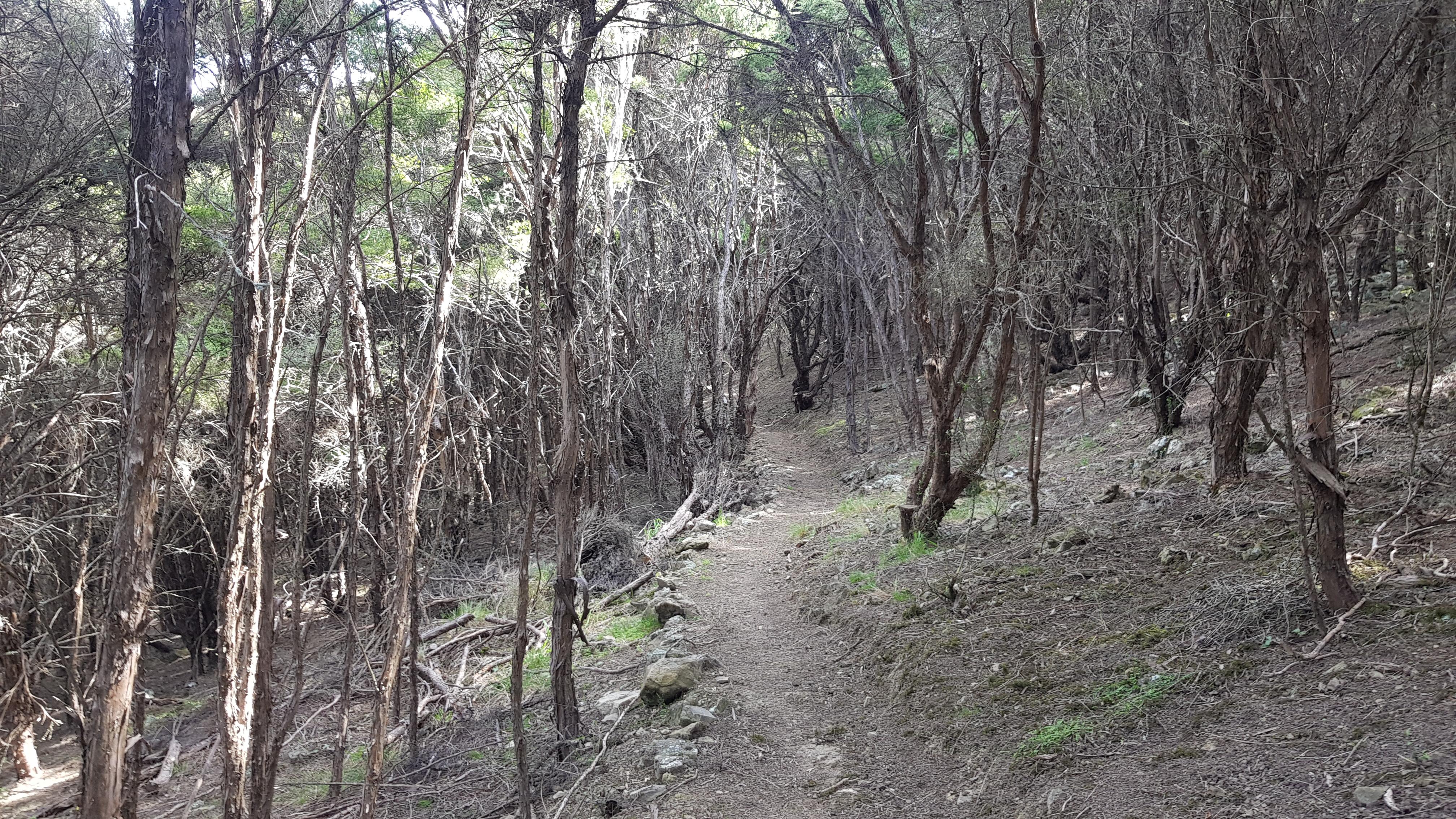 Blairich mountain bike track