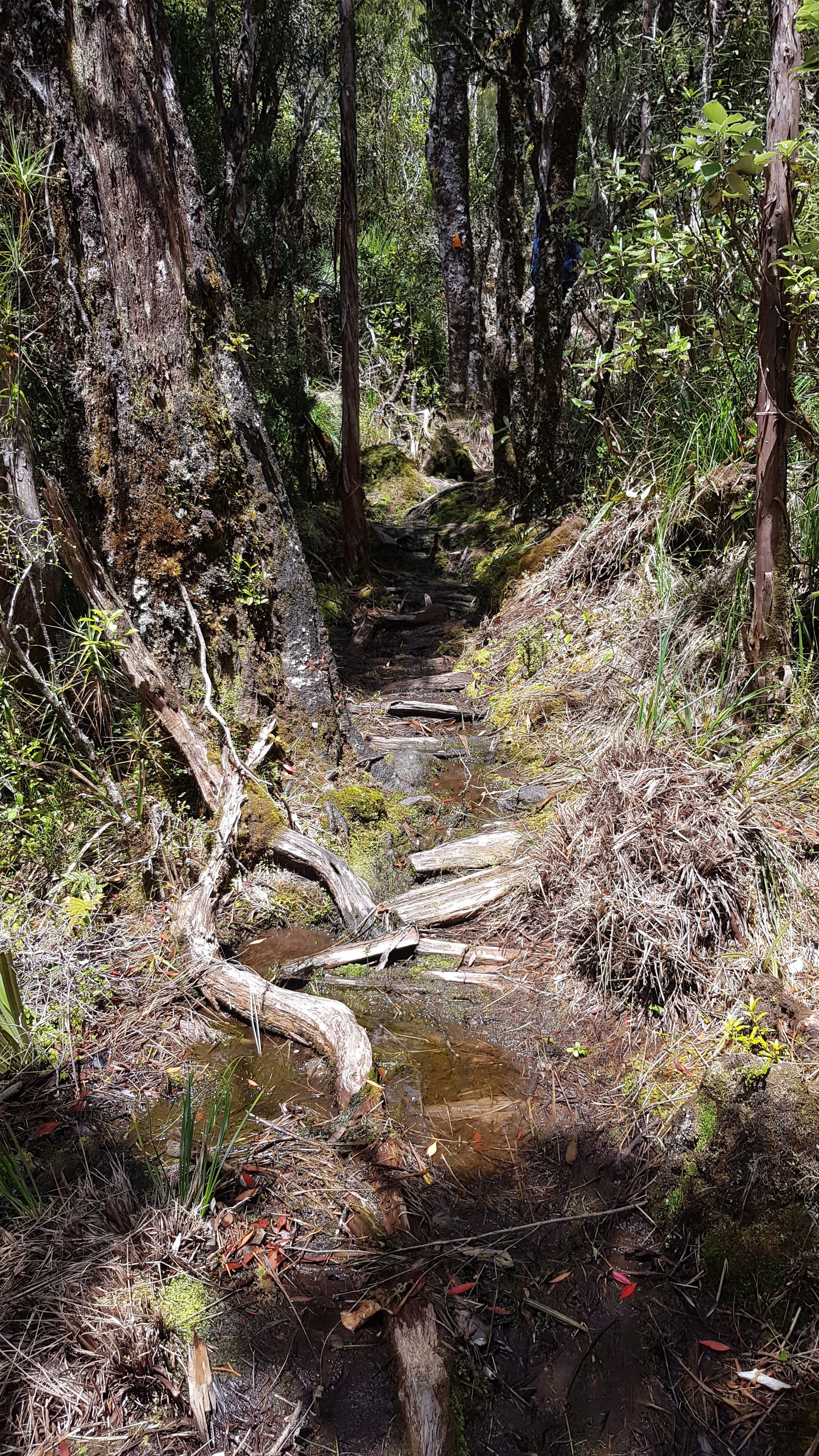 Muddy - after Camp Creek hut