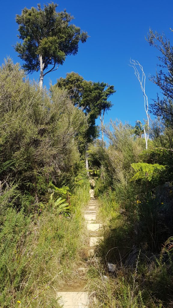 The Mt Cawte track