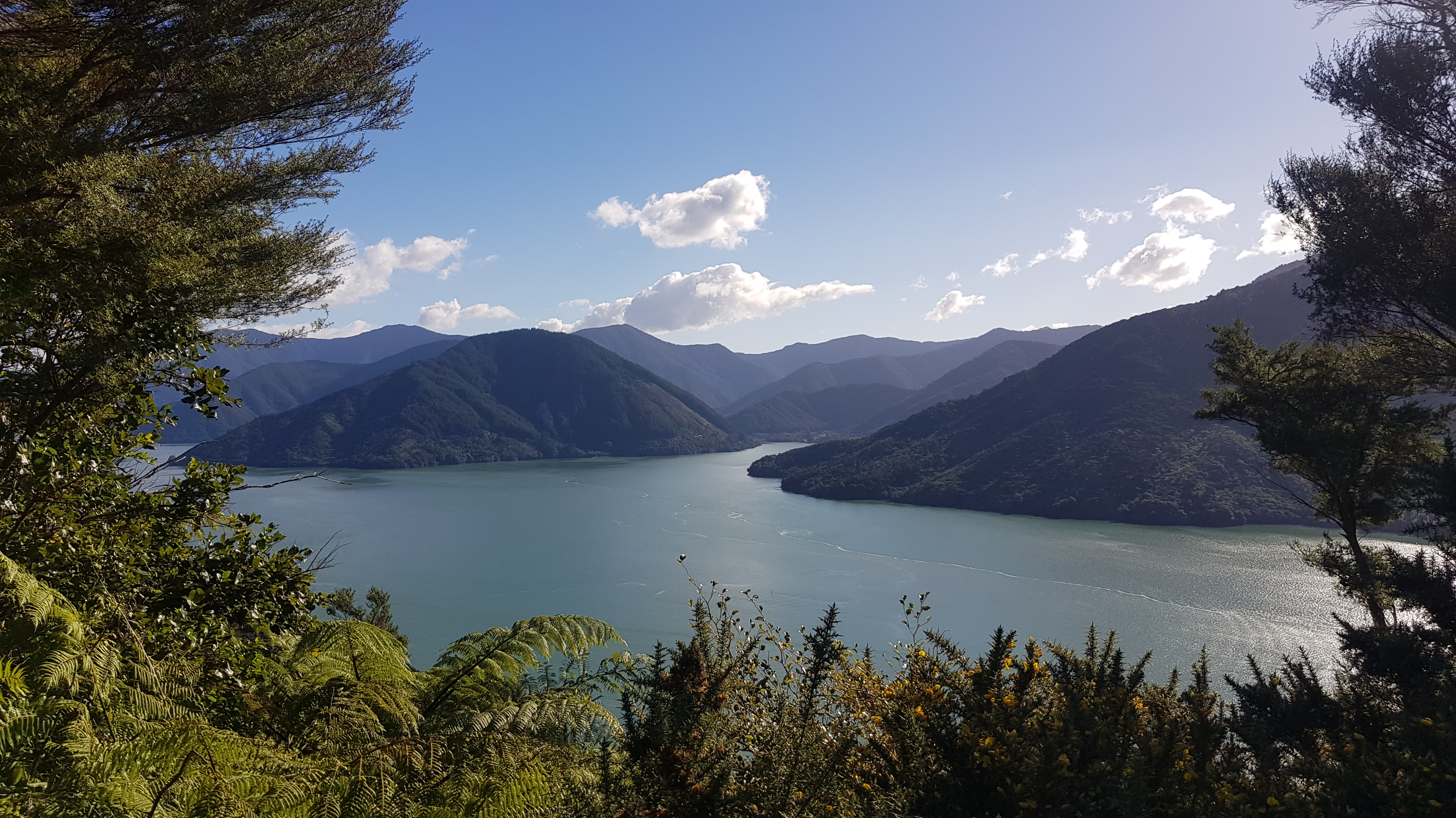 Pelorous Sound from Mt Cawte