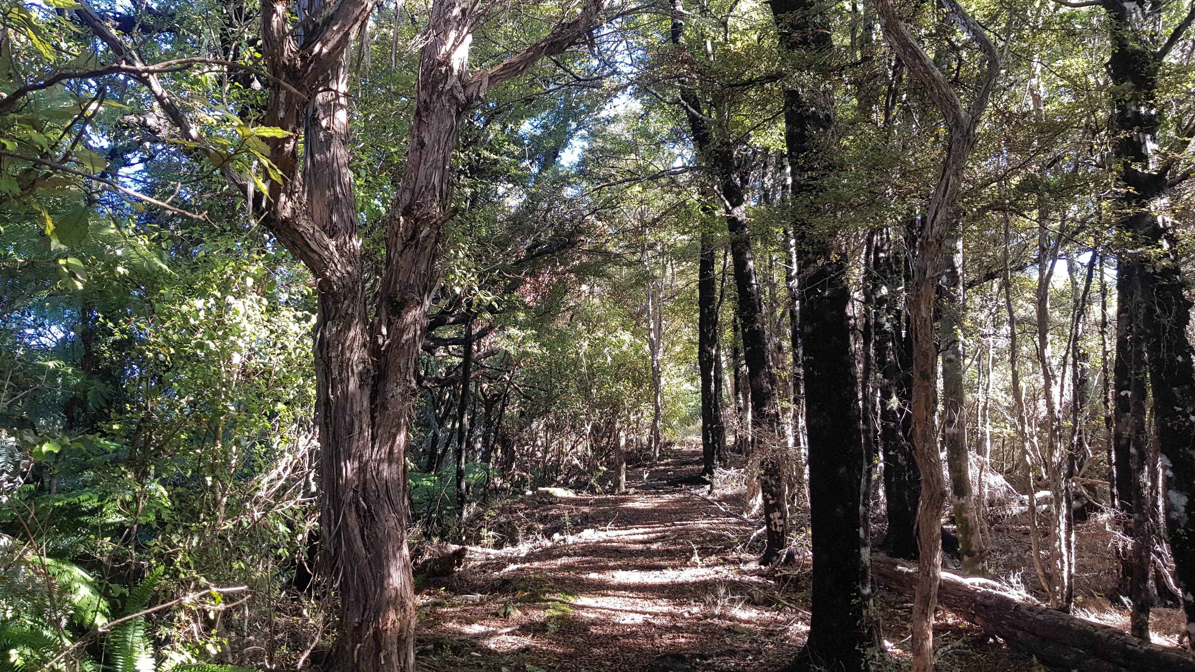 Mt Cawte track