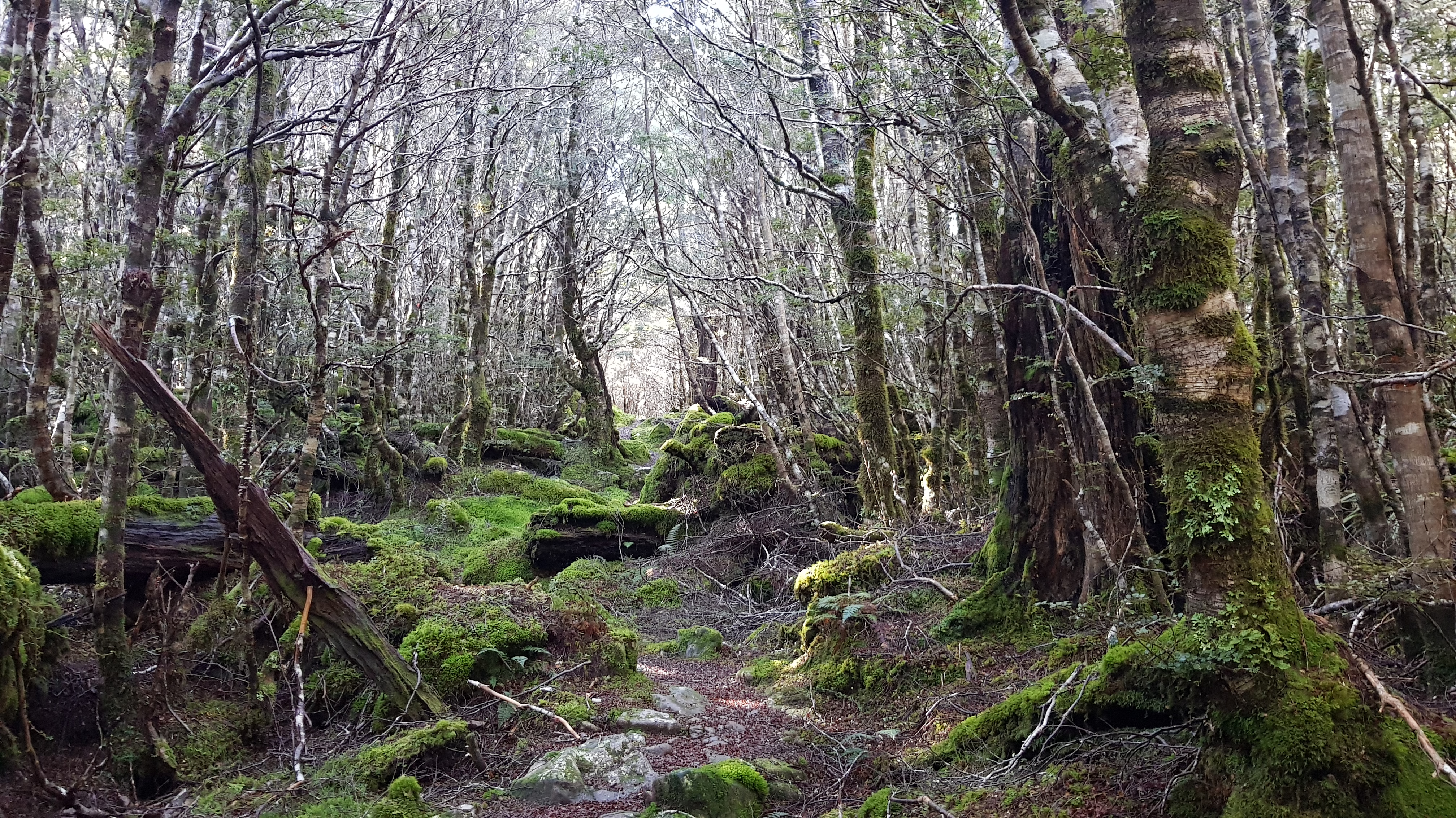Mossy forest close to Cannibal Gorge hut