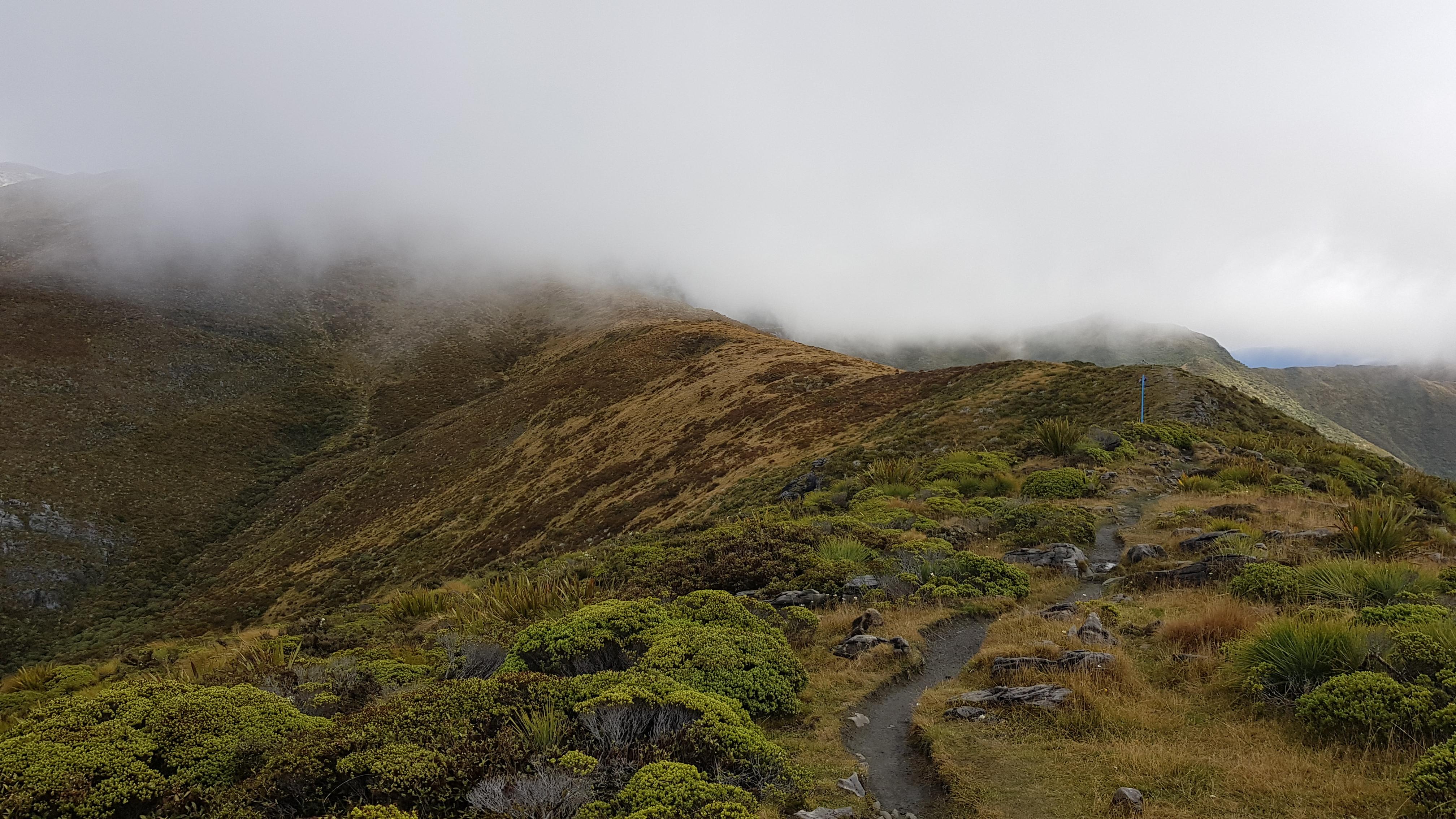 Mt Arthur tops
