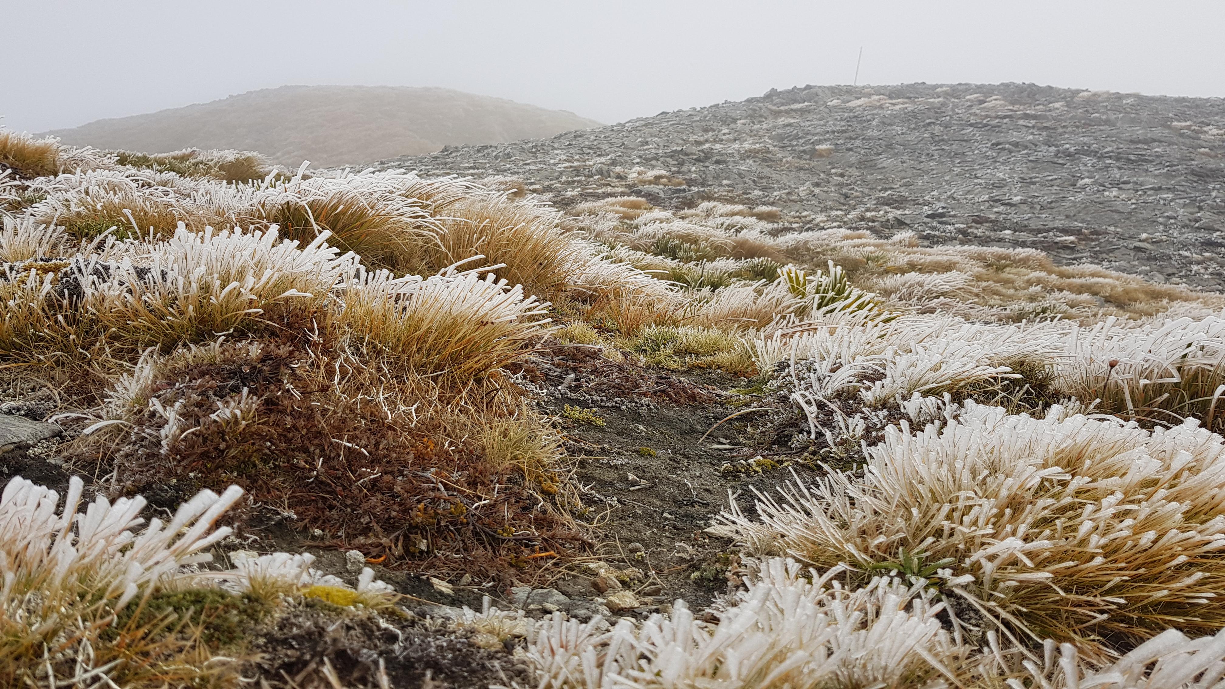 Beneath Winter Peak