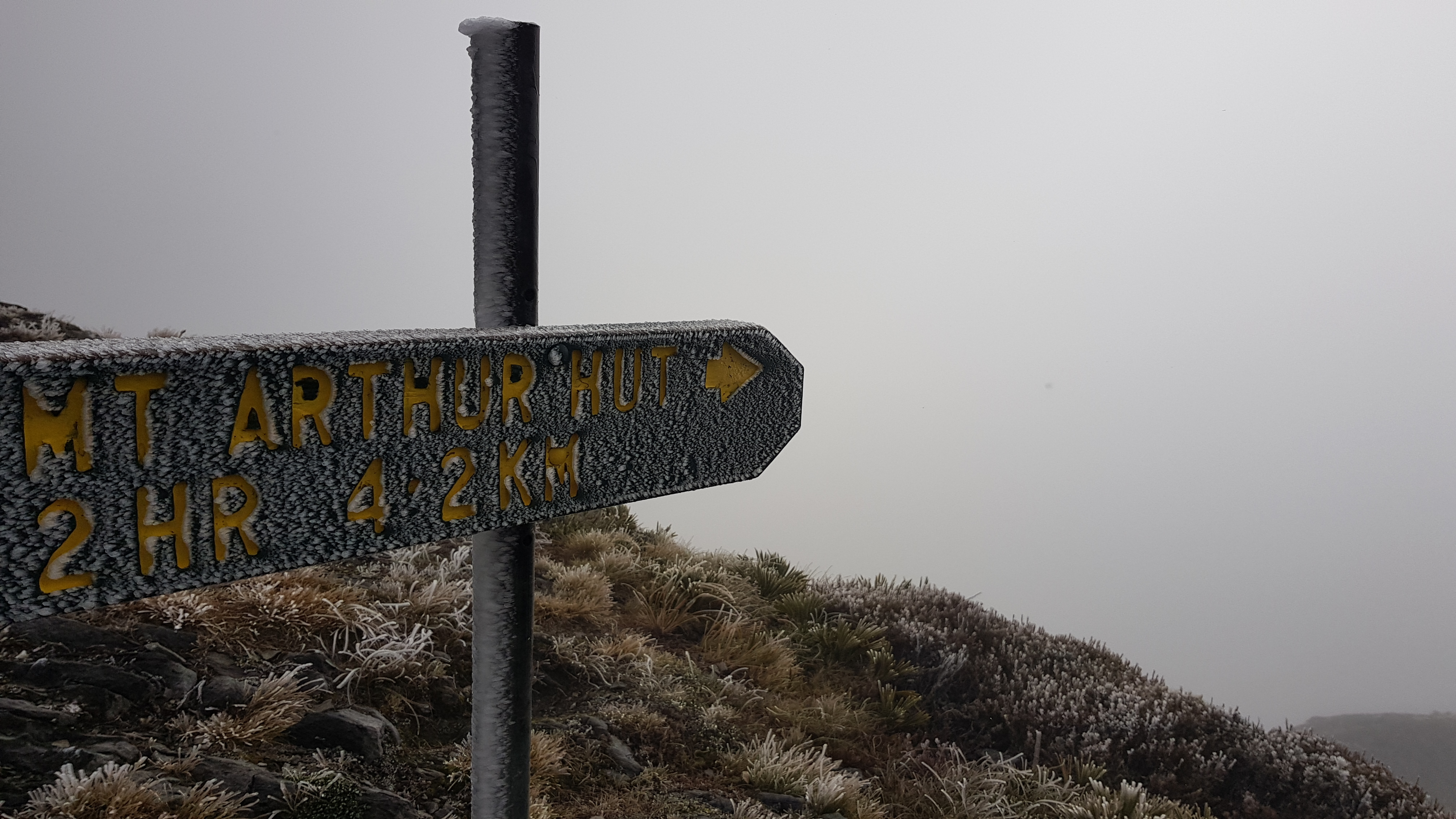Mt Arthur Route